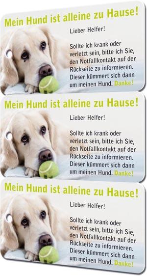 Notfallkarten Hund Labrador 3er-Set