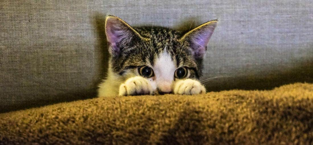 Notfallkarten Haustiere Titel