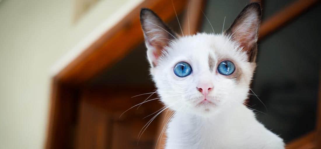 Notfallkarten Katzen Titel