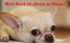 Kostenlose Notfallkarten Hunde-zum Ausdrucken-Chihuahua