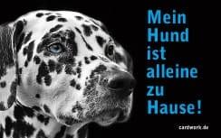Kostenlose Notfallkarten Hunde zum Ausdrucken Dalmatiner