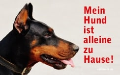 Kostenlose Notfallkarten Hunde-zum Ausdrucken-Dobermann