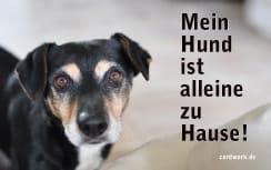 Kostenlose Notfallkarten Hunde zum Ausdrucken Jack Russell