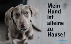 kostenlose Notfallkarten Hunde zum Ausdrucken Weimaraner