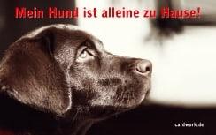 Kostenlose Notfallkarten Hunde zum Ausdrucken Labrador